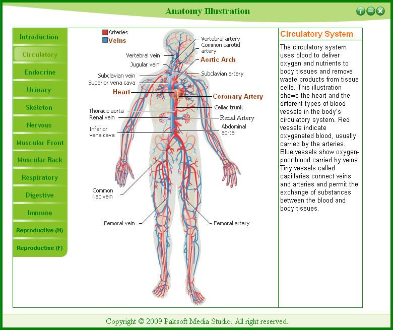 скачать приложение анатомия - фото 4